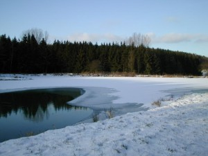 Winter am Teich